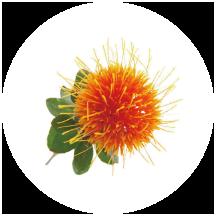 紅花種子油